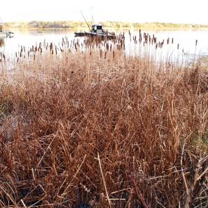 Reeds, Rope's Beach